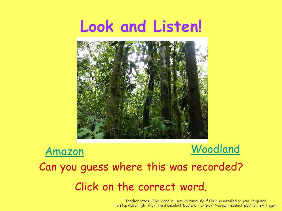 Look and Listen! Woodland Amazon