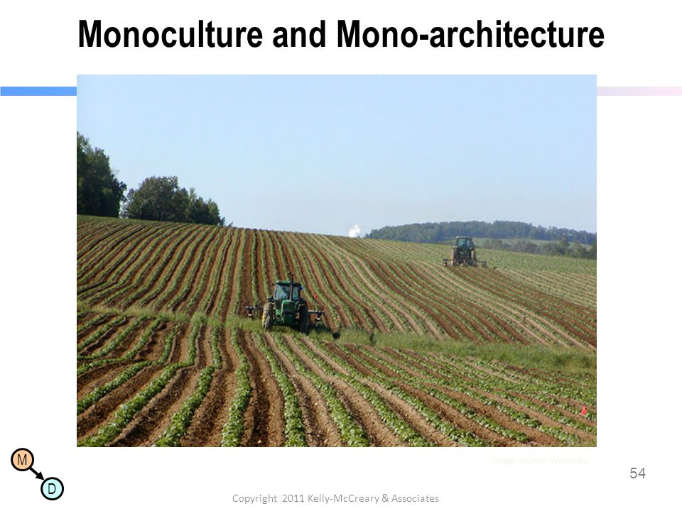 Monoculture and Mono-architecture