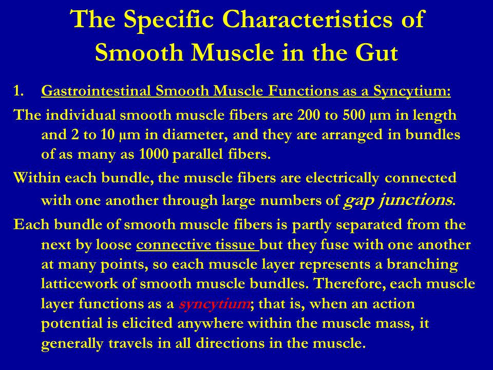 The Specific Characteristics of Smooth Muscle in the Gut