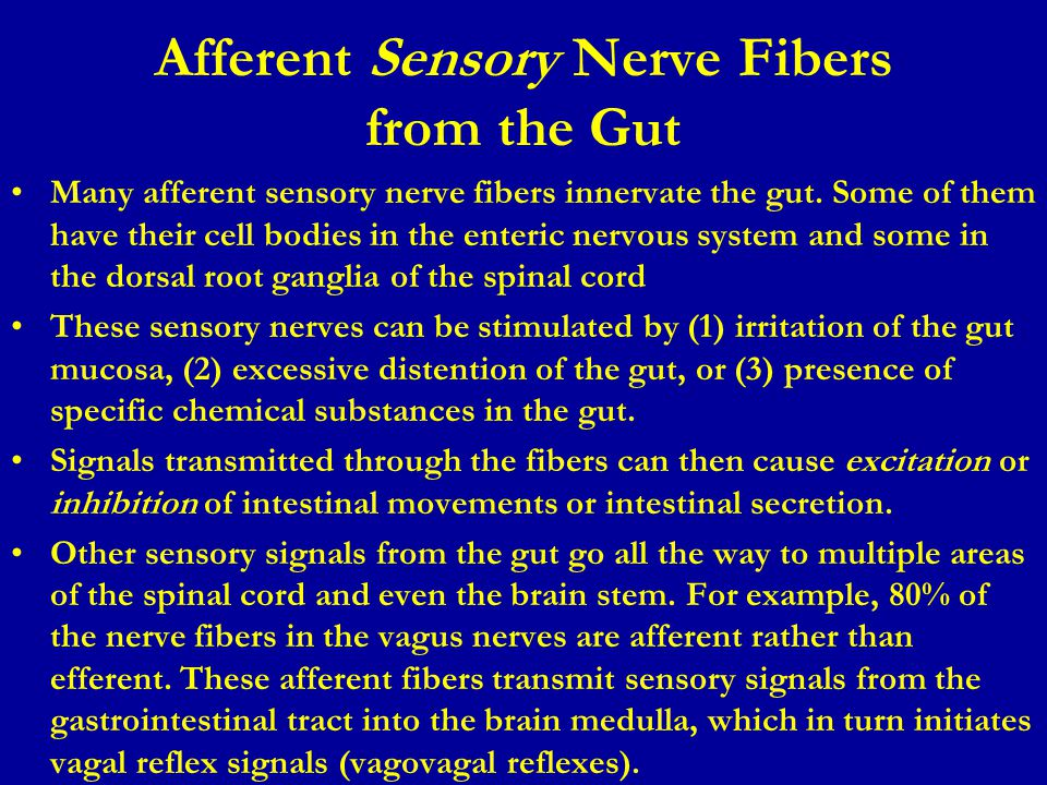 Afferent Sensory Nerve Fibers from the Gut