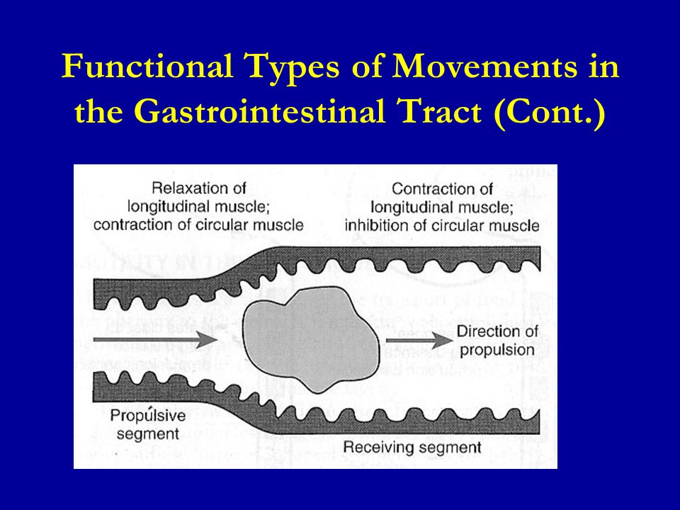 Functional Types of Movements in the Gastrointestinal Tract (Cont.)