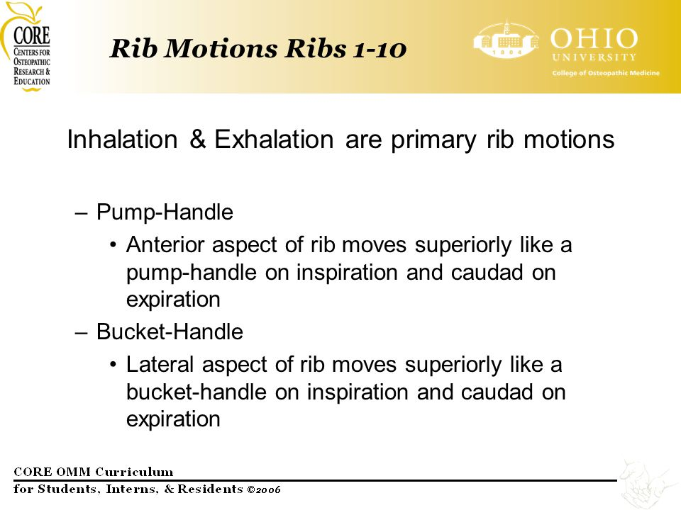 Inhalation & Exhalation are primary rib motions