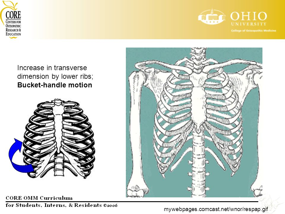 Increase in transverse dimension by lower ribs; Bucket-handle motion