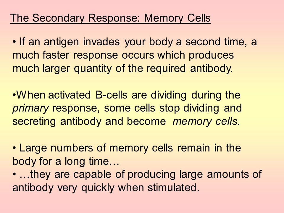 The Secondary Response: Memory Cells