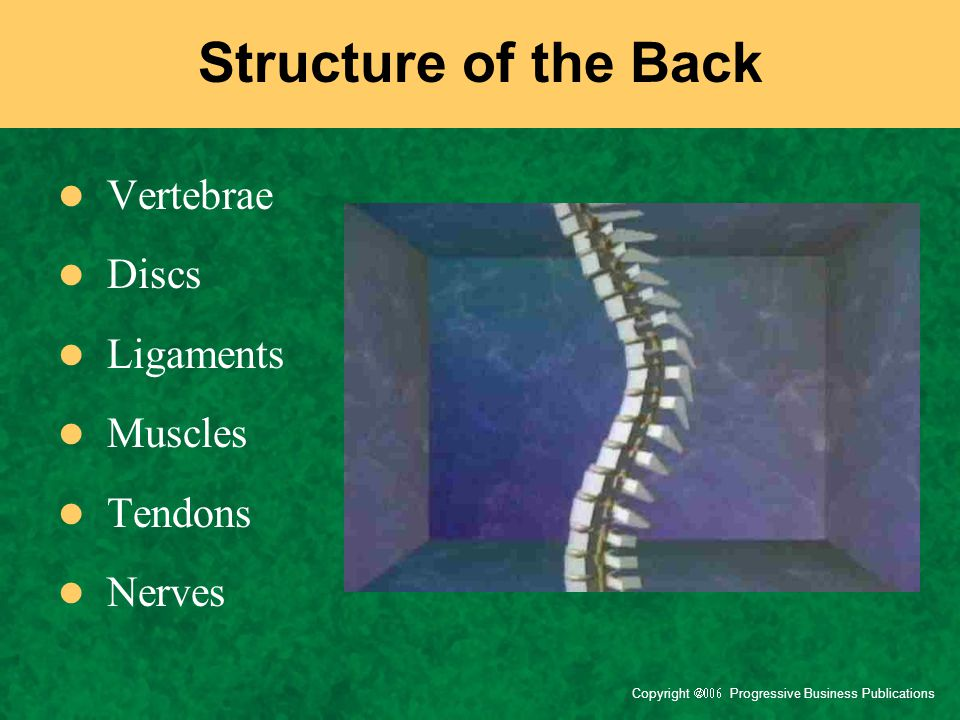 Structure of the Back Vertebrae Discs Ligaments Muscles Tendons Nerves