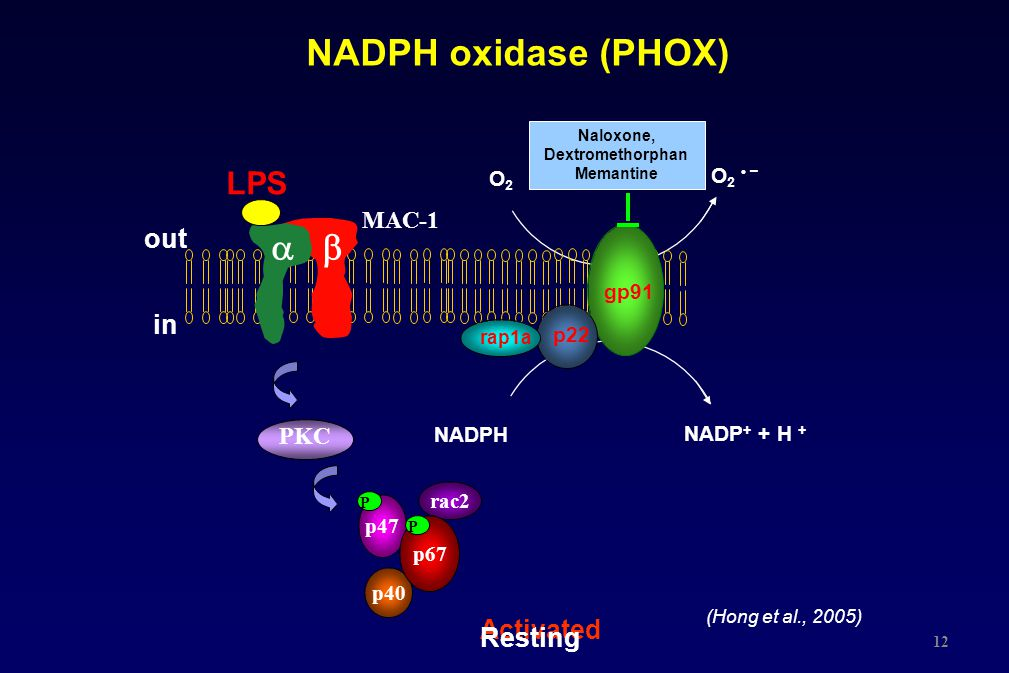 NADPH oxidase (PHOX) a  LPS out in Activated Resting MAC-1 PKC O2