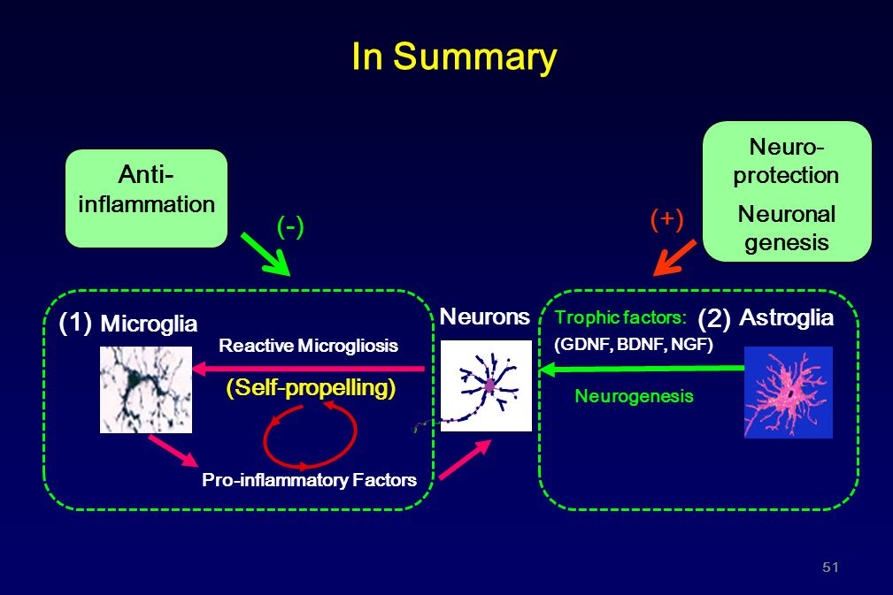 In Summary Anti-inflammation (+) (-) (2) (1) Neuro-protection Neuronal