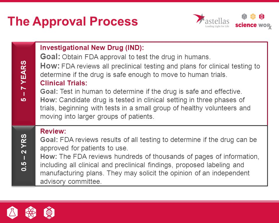The Approval Process Investigational New Drug (IND): Goal: Obtain FDA approval to test the drug in humans.