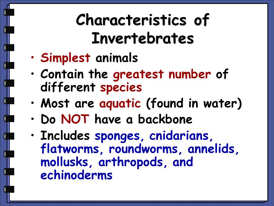 Characteristics of Invertebrates