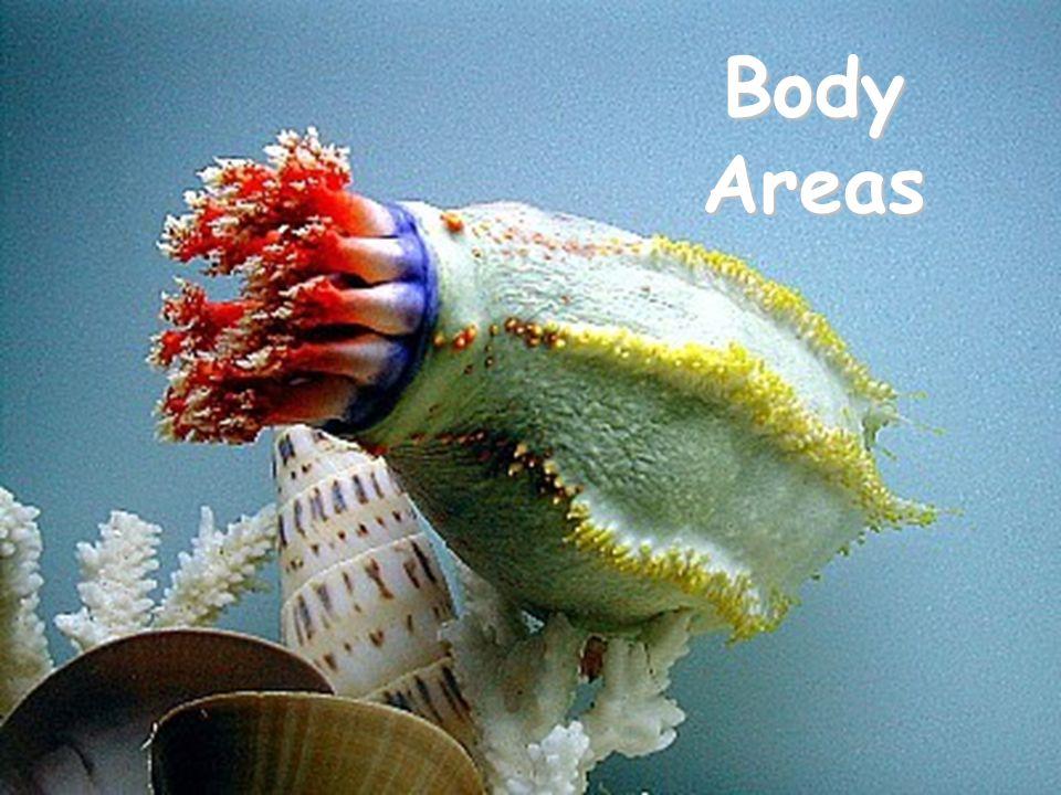 Body Areas copyright cmassengale