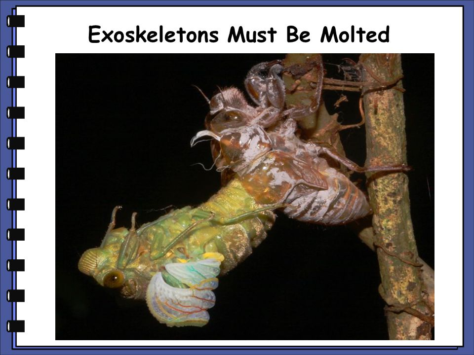 Exoskeletons Must Be Molted