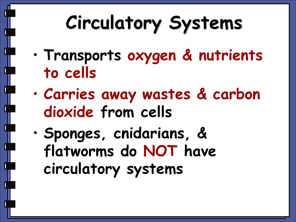 Circulatory Systems Transports oxygen & nutrients to cells