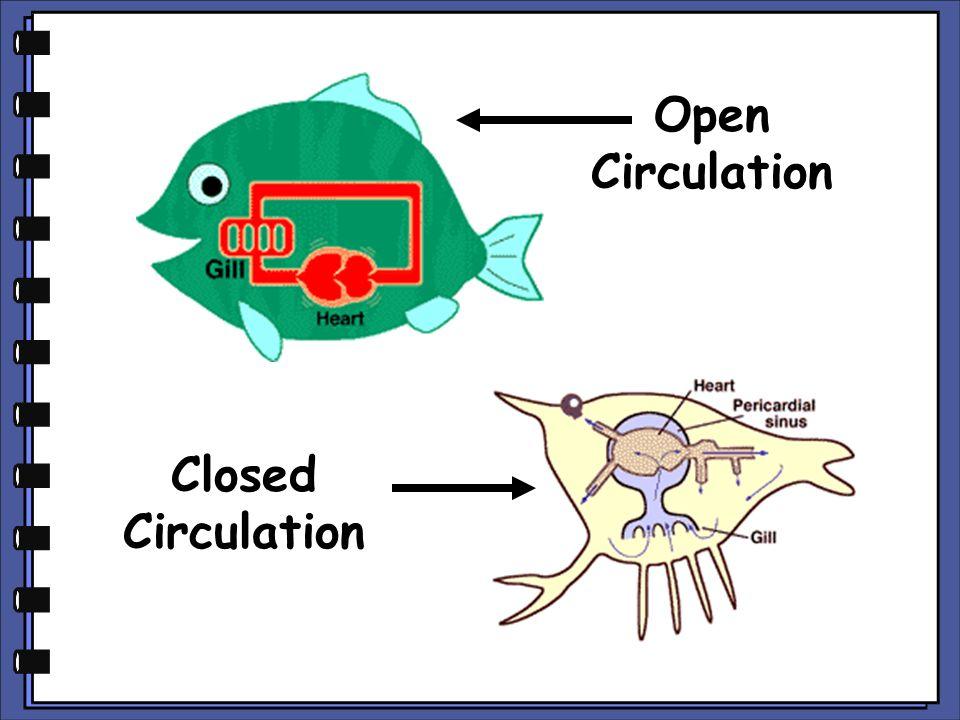 Open Circulation Closed Circulation