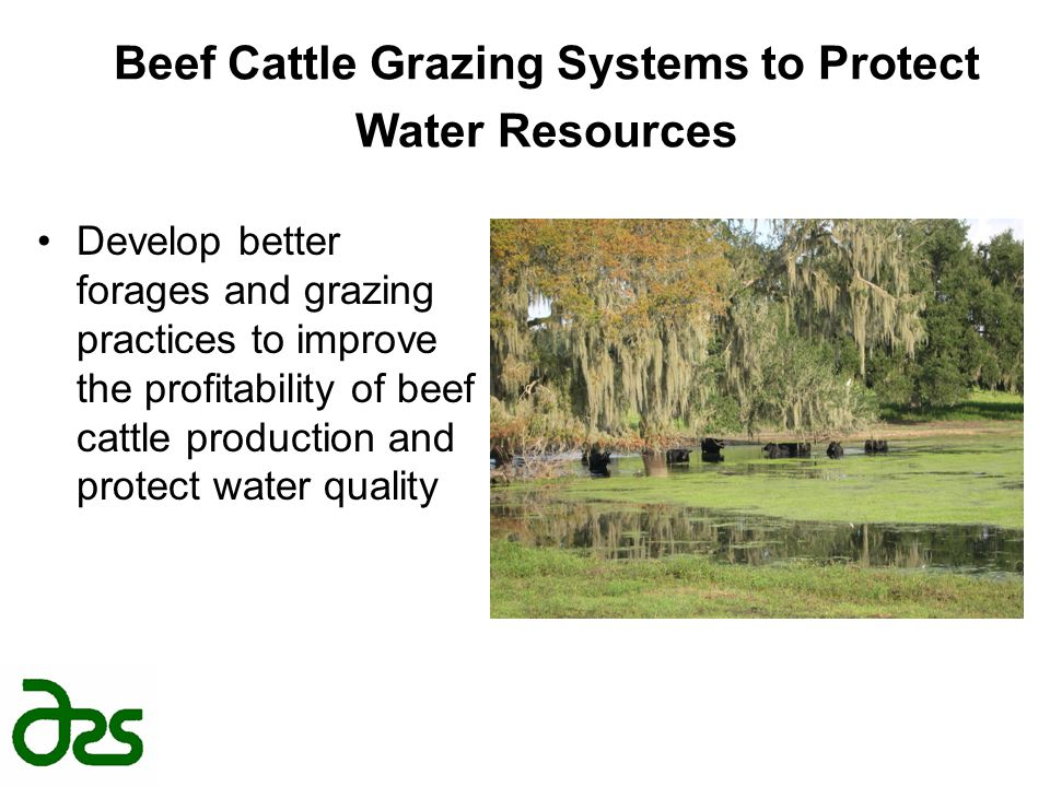 Beef Cattle Grazing Systems to Protect Water Resources