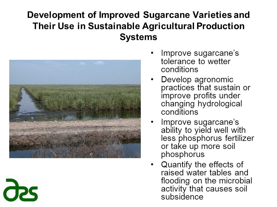 Development of Improved Sugarcane Varieties and Their Use in Sustainable Agricultural Production Systems