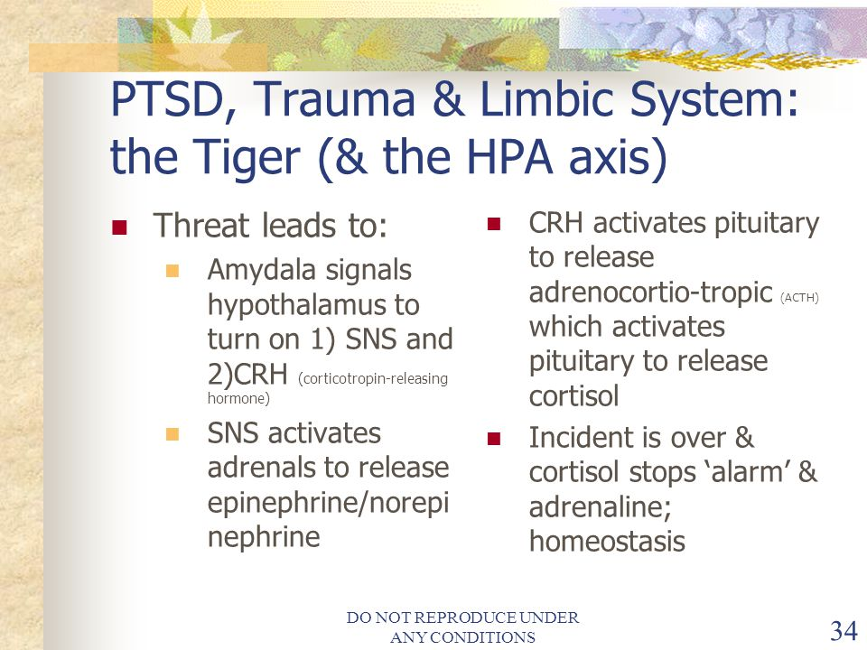 PTSD, Trauma & Limbic System: the Tiger (& the HPA axis)
