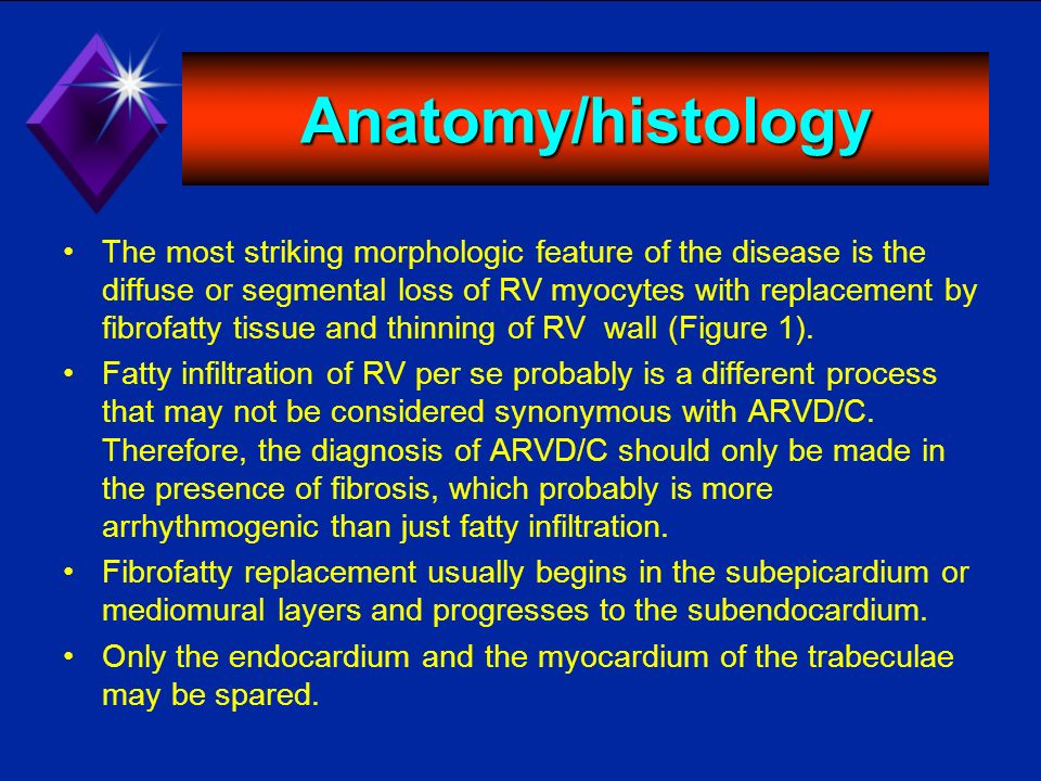 Anatomy/histology