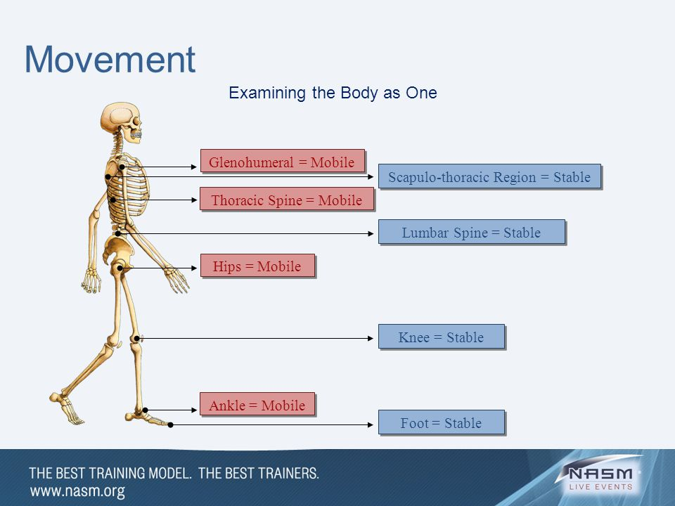 Movement Examining the Body as One Glenohumeral = Mobile