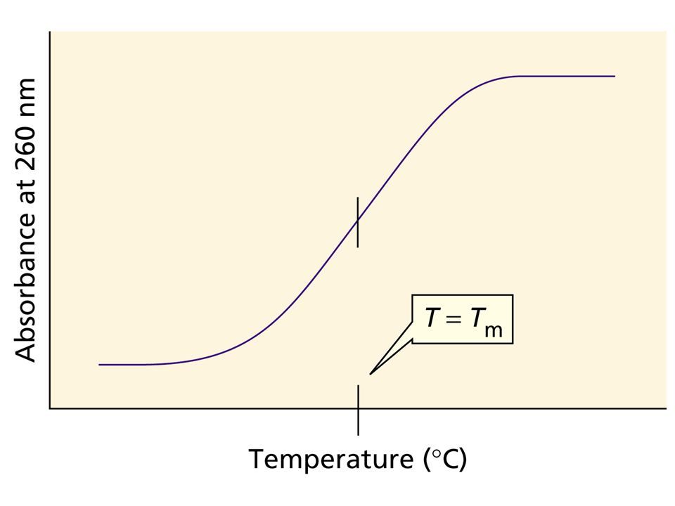 Figure Number: 08-11 Title: Figure 8.11. Caption: The absorbance of a solution of DNA at 260 nm as a function of the temperature of the solution.