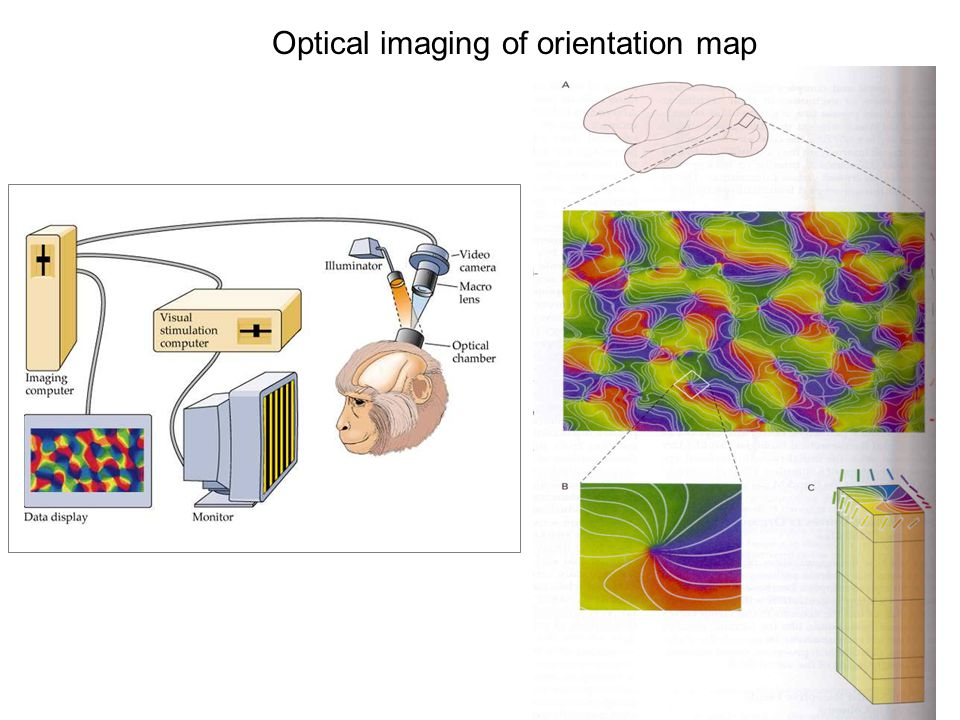 Optical imaging of orientation map