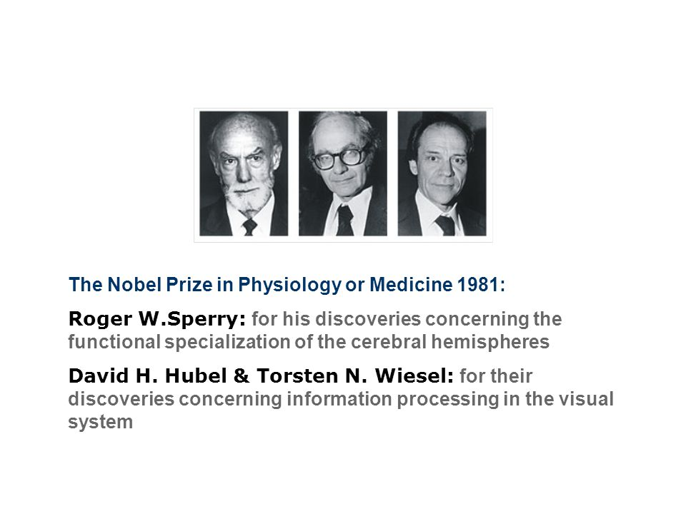 The Nobel Prize in Physiology or Medicine 1981:
