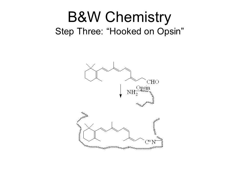 B&W Chemistry Step Three: Hooked on Opsin
