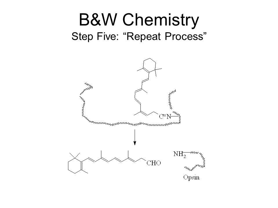 B&W Chemistry Step Five: Repeat Process