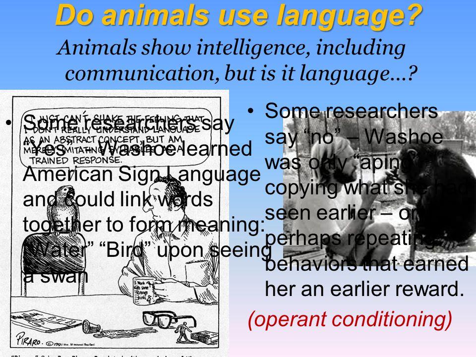 Do animals use language