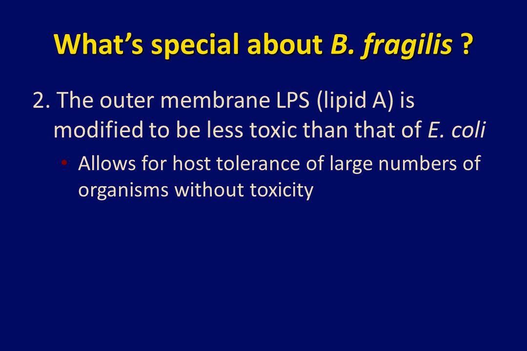 What's special about B. fragilis