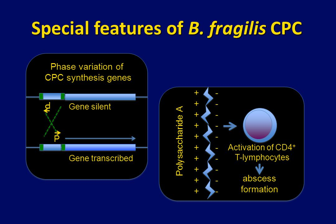 Special features of B. fragilis CPC