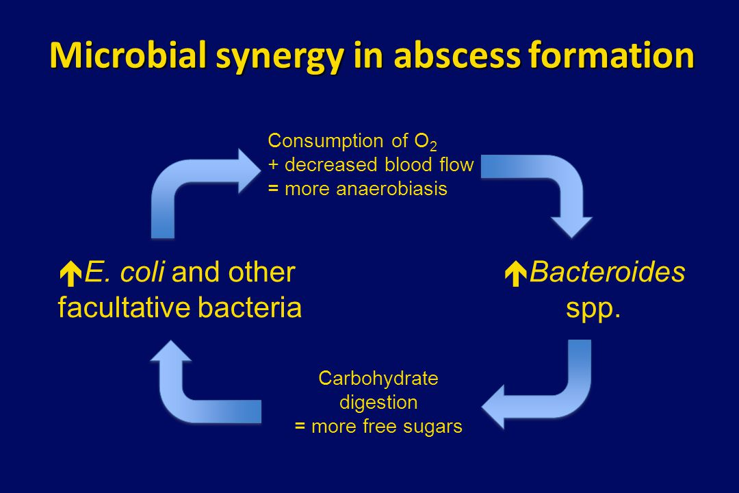 Microbial synergy in abscess formation