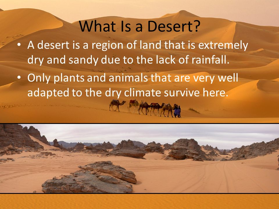 What Is a Desert A desert is a region of land that is extremely dry and sandy due to the lack of rainfall.
