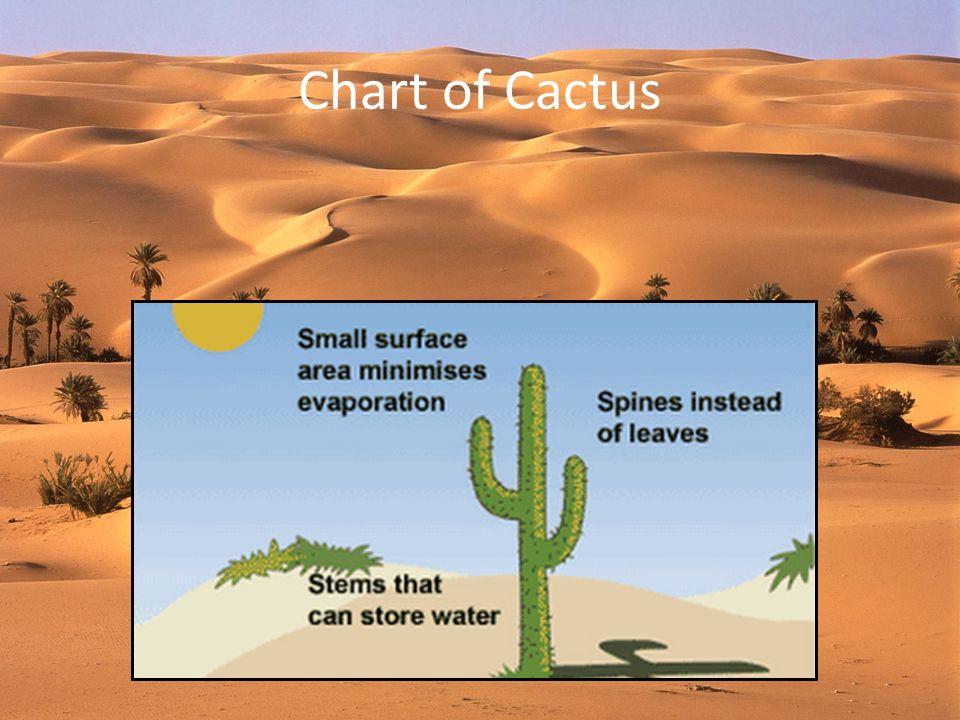 Chart of Cactus