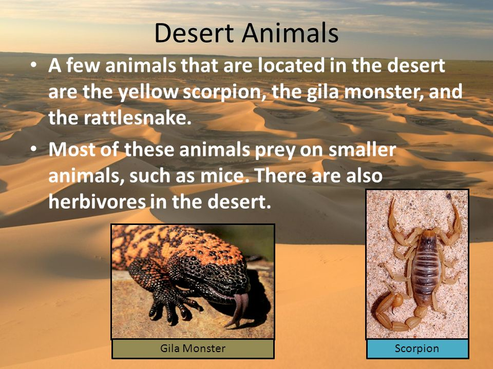 Desert Animals A few animals that are located in the desert are the yellow scorpion, the gila monster, and the rattlesnake.