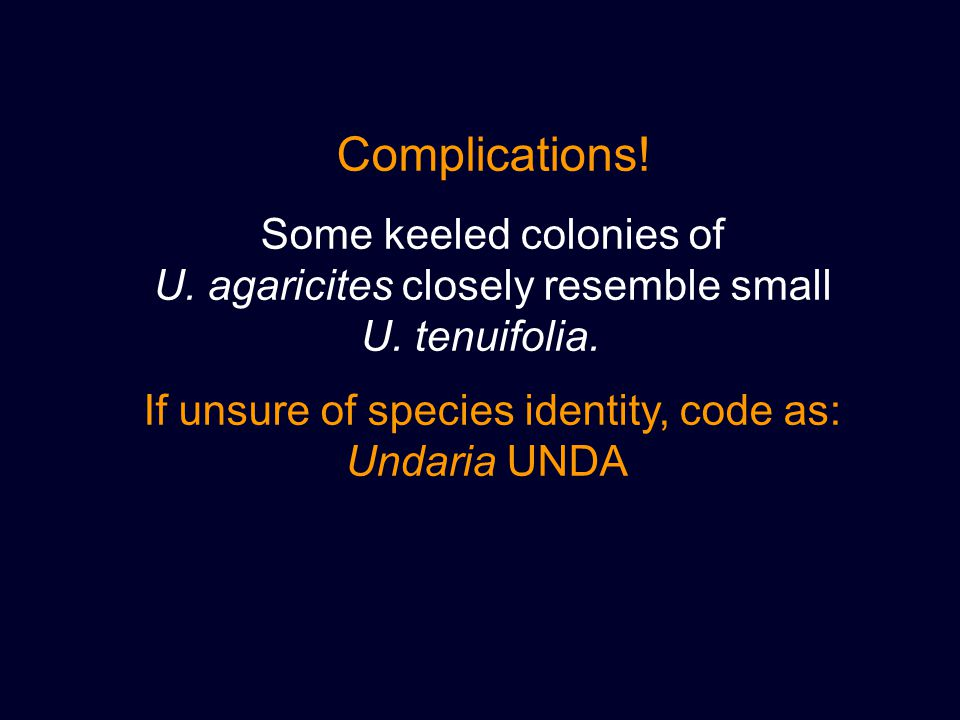 Complications! Some keeled colonies of