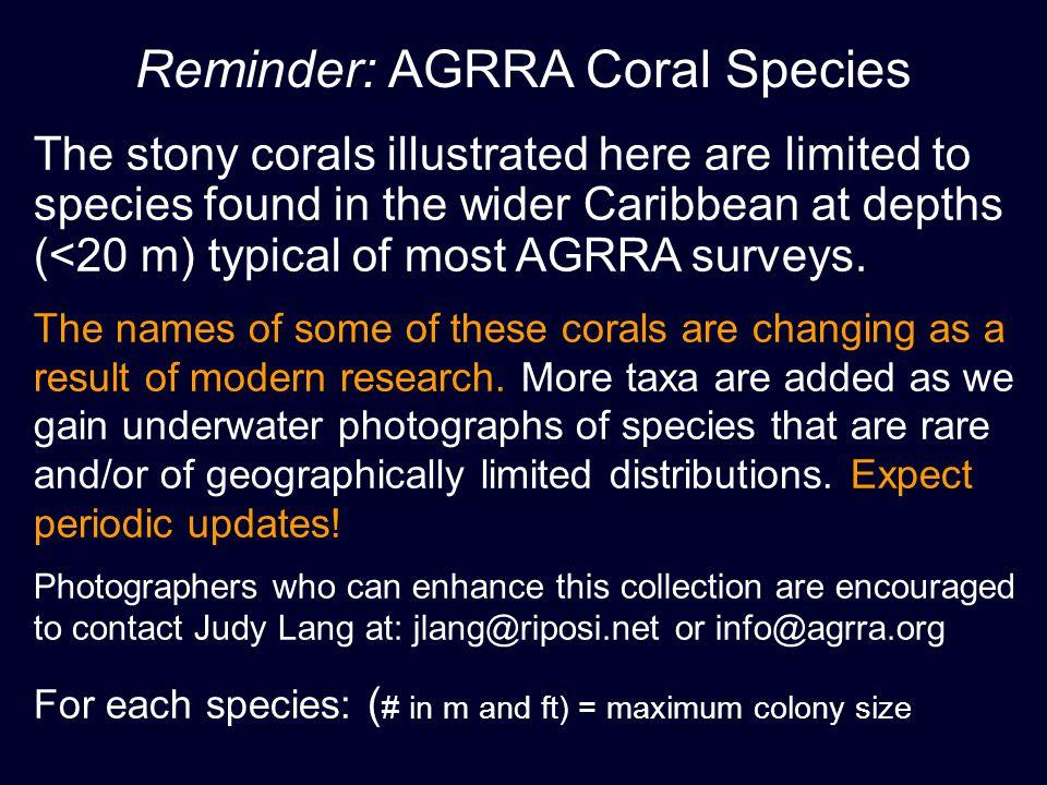 Reminder: AGRRA Coral Species