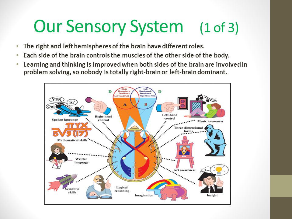 Our Sensory System (1 of 3)
