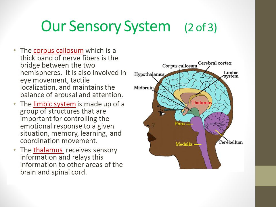 Our Sensory System (2 of 3)