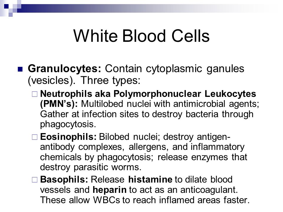 White Blood Cells Granulocytes: Contain cytoplasmic ganules (vesicles). Three types: