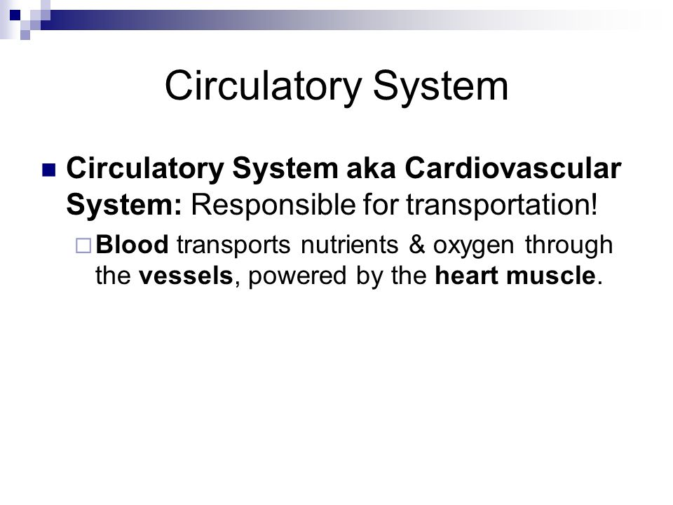Circulatory System Circulatory System aka Cardiovascular System: Responsible for transportation!