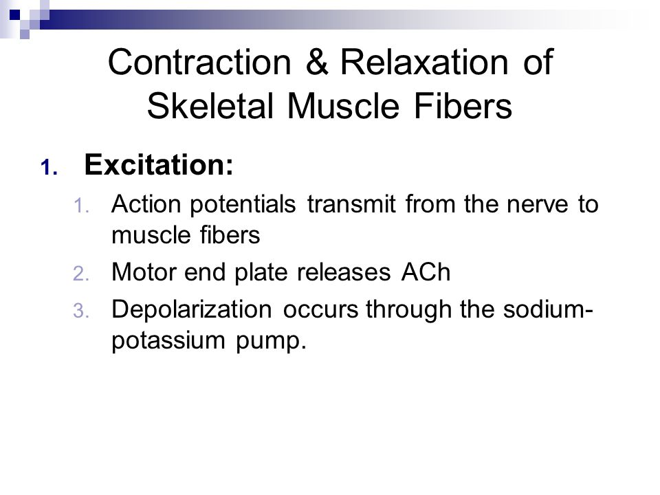Contraction & Relaxation of Skeletal Muscle Fibers