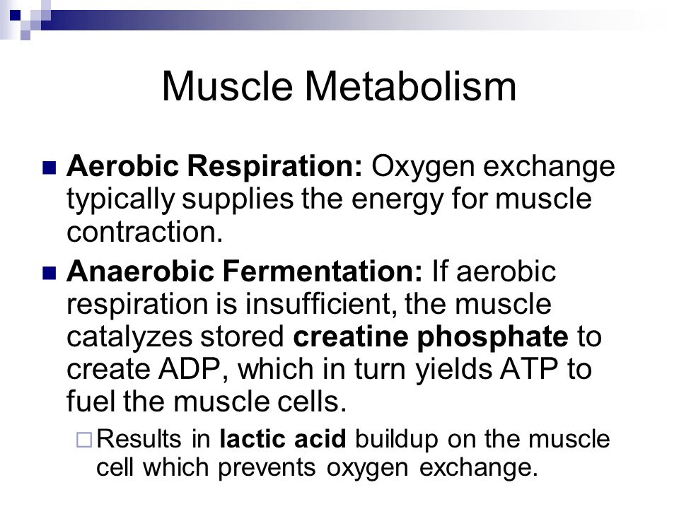 Muscle Metabolism Aerobic Respiration: Oxygen exchange typically supplies the energy for muscle contraction.