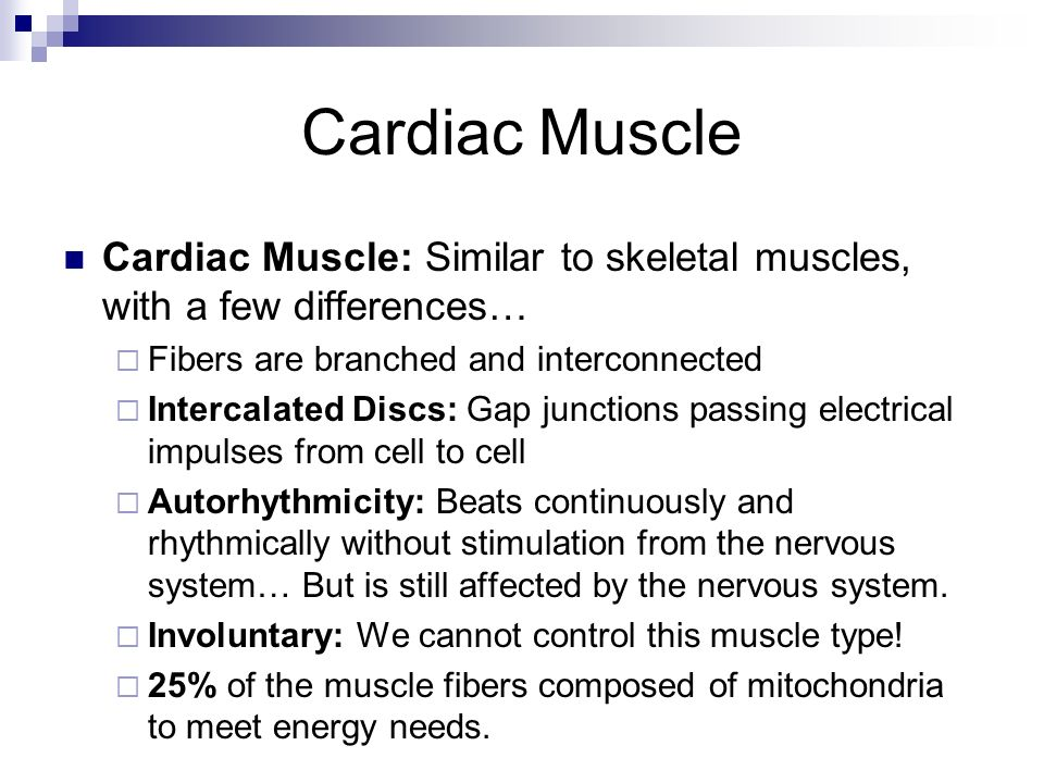 Cardiac Muscle Cardiac Muscle: Similar to skeletal muscles, with a few differences… Fibers are branched and interconnected.