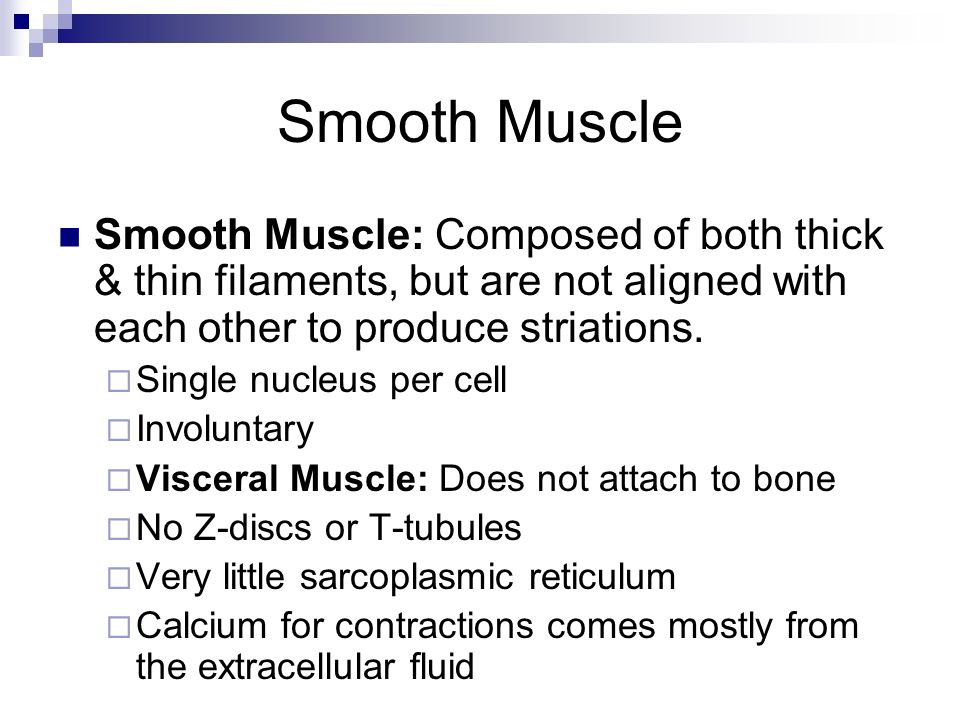 Smooth Muscle Smooth Muscle: Composed of both thick & thin filaments, but are not aligned with each other to produce striations.