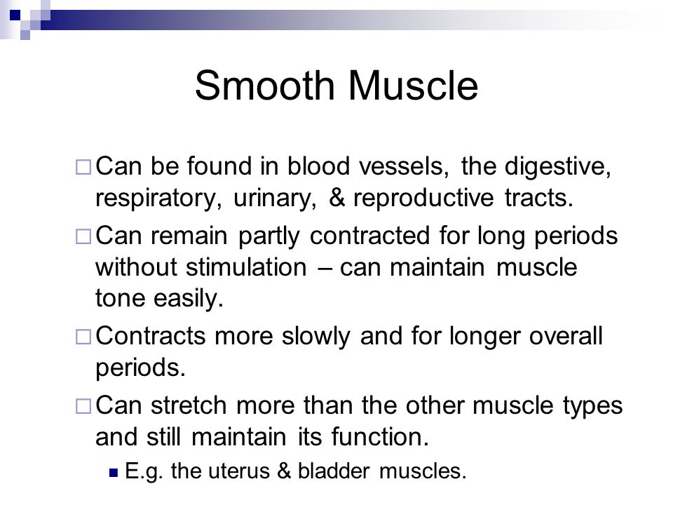 Smooth Muscle Can be found in blood vessels, the digestive, respiratory, urinary, & reproductive tracts.