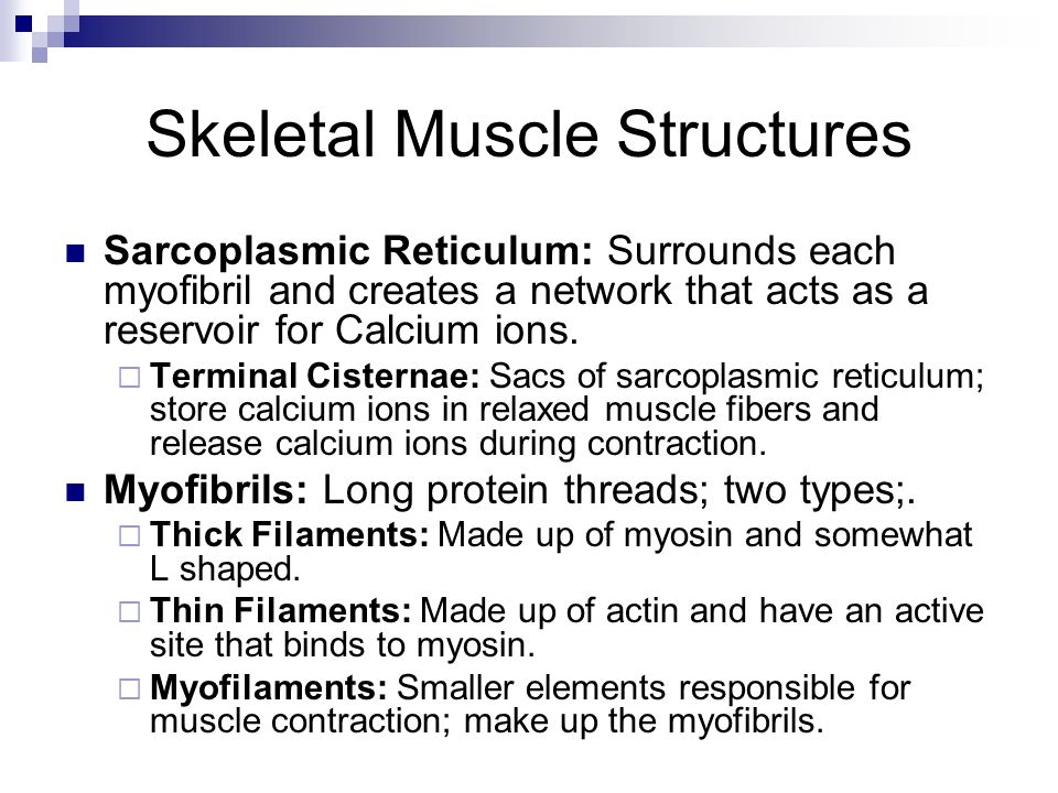 Skeletal Muscle Structures