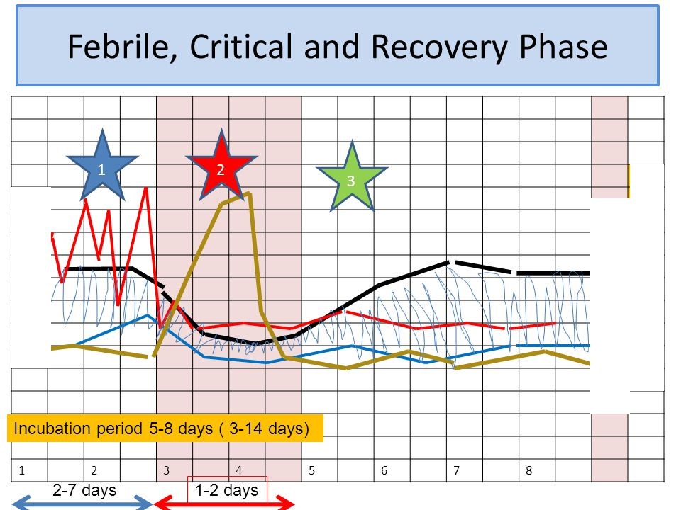 Febrile, Critical and Recovery Phase