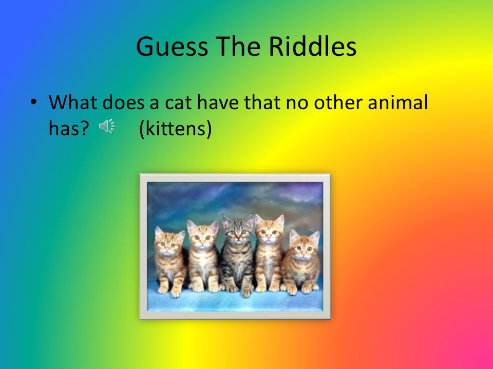Guess The Riddles What does a cat have that no other animal has (kittens)