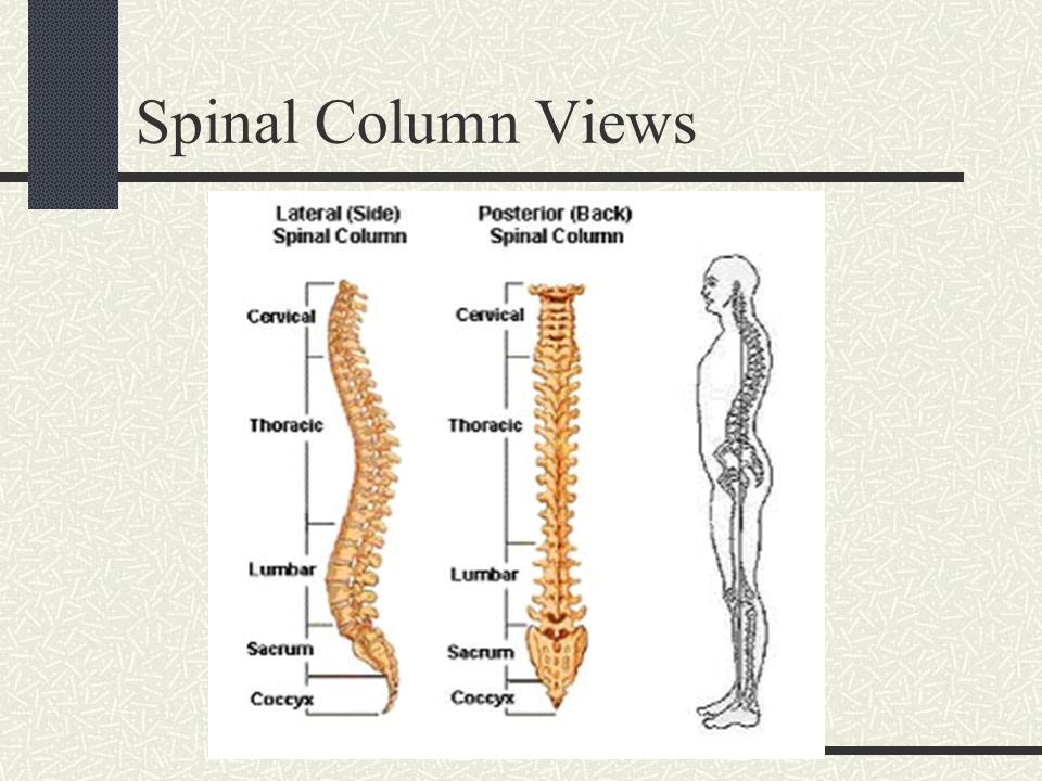 Spinal Column Views