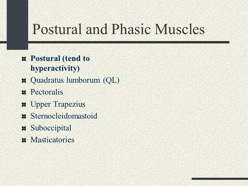 Postural and Phasic Muscles